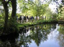 Parc naturel de Brière